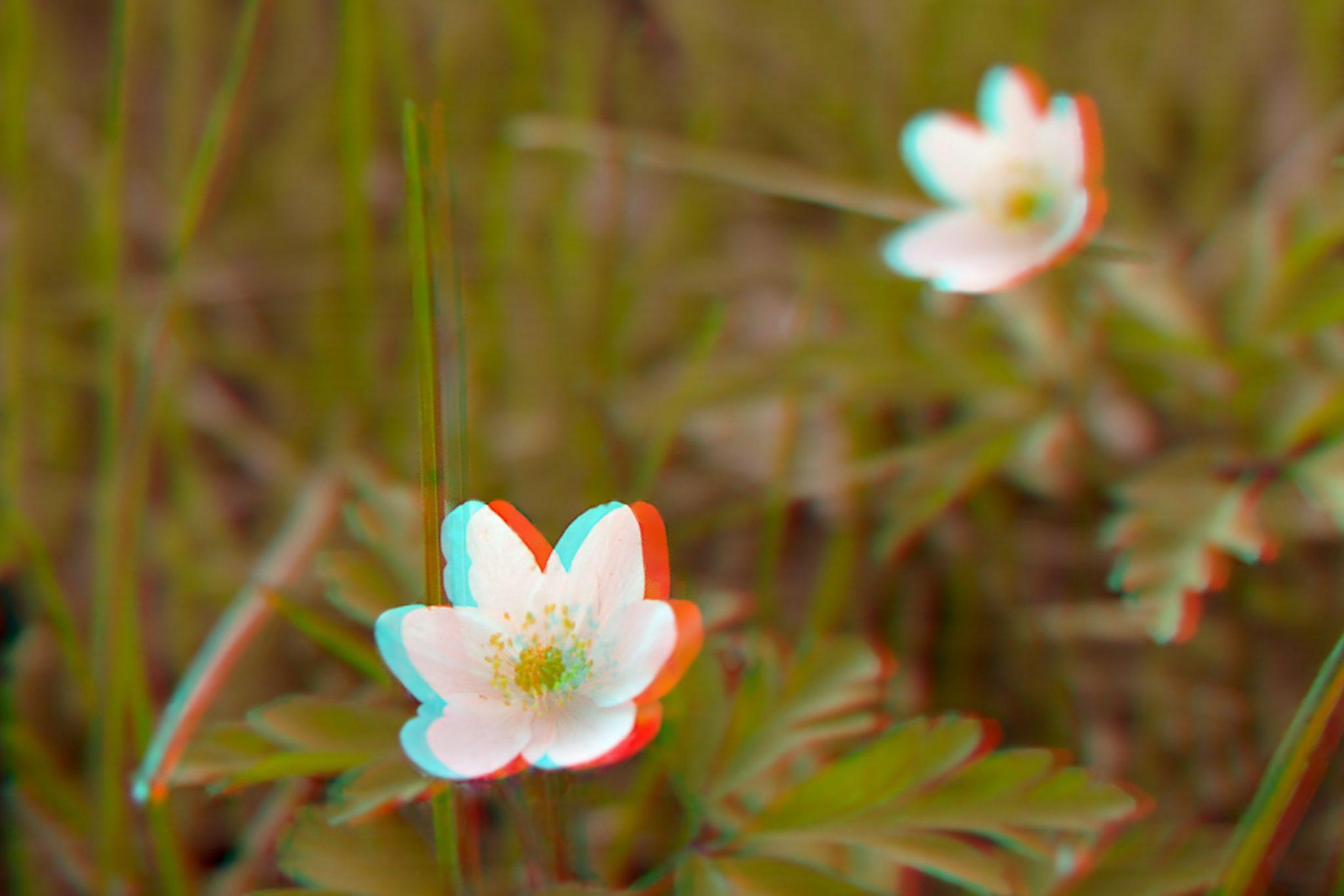 Mit Lichtfeldfdotografie 3D Fotos erstellen.